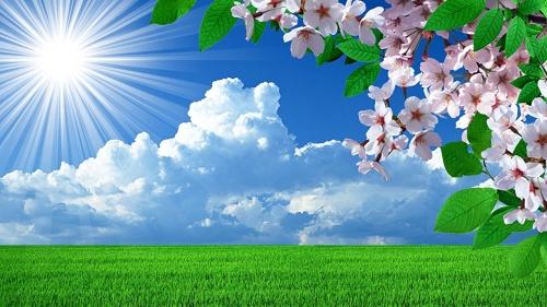 Spring_Flowering_trees_464126.jpg