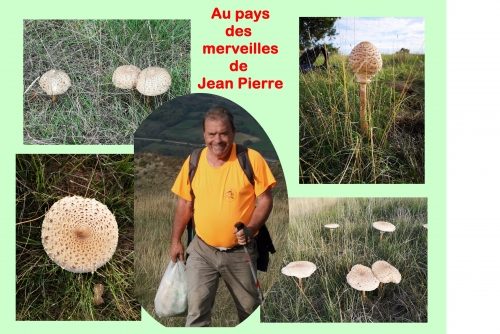 20191030 Jean Pierre élargi.jpg